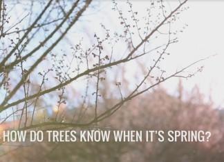primavara-copaci---stiinta-tehnica
