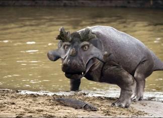 crocodil încoronat
