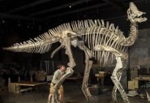 dinozaur cu cioc de rață