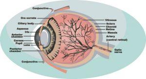 genetica-ochi-stiinta-tehnica-3