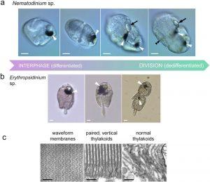 genetica-ochi-stiinta-tehnica-5