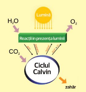 decarbonizare-co2-stiinta-tehnica-5