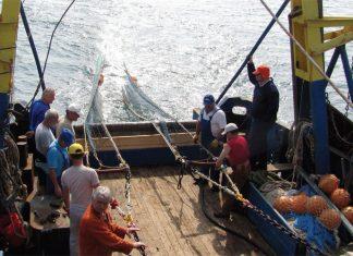 pescuit-marea-neagra-incdm-stiinta-tehnica-1