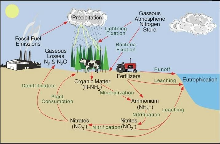 eutrofizare-ape-poluare-marea-neagra-stiinta-tehnica-2