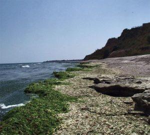 incdm-alge-marine-marea-neagra-stiinta-tehnica-3