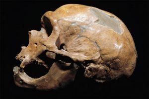 neanderthal-omul-nou-stiinta-tehnica-5