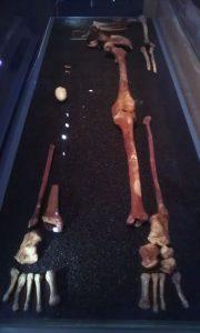 neanderthal-omul-nou-stiinta-tehnica-8