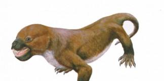reptilo-mamifere