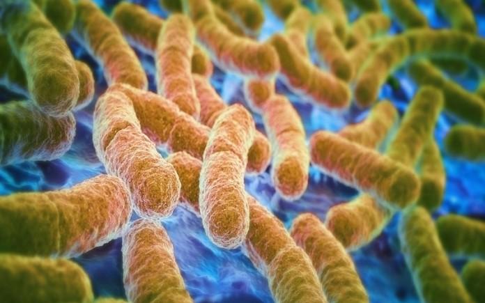 Bacterii-intestinale
