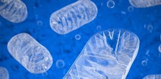 Vitamina-opreste-procesul-de-imbatranire-al-organelor