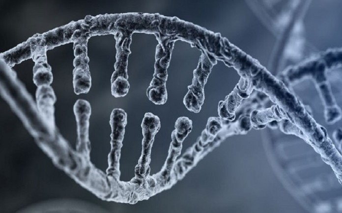 ADN CRISPR