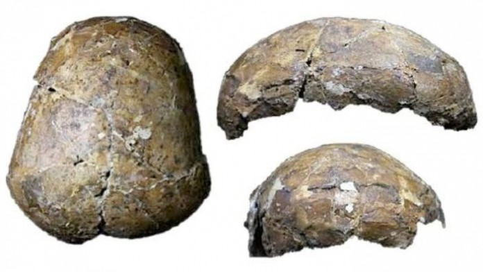 craniu preistoric